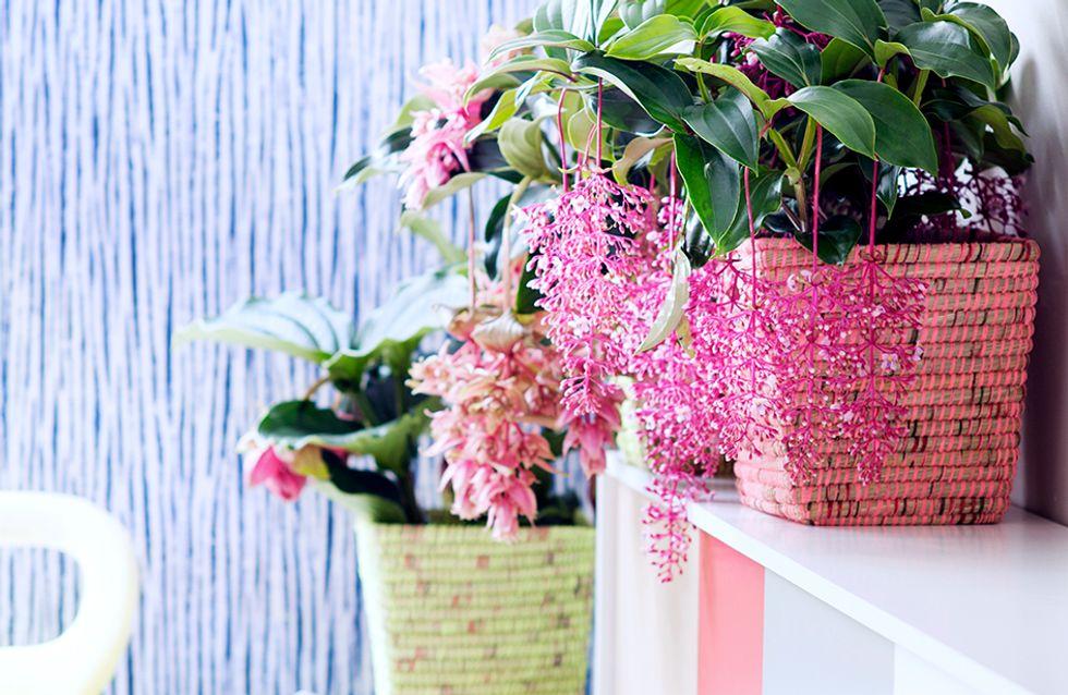 Succombez aux beautés tropicales