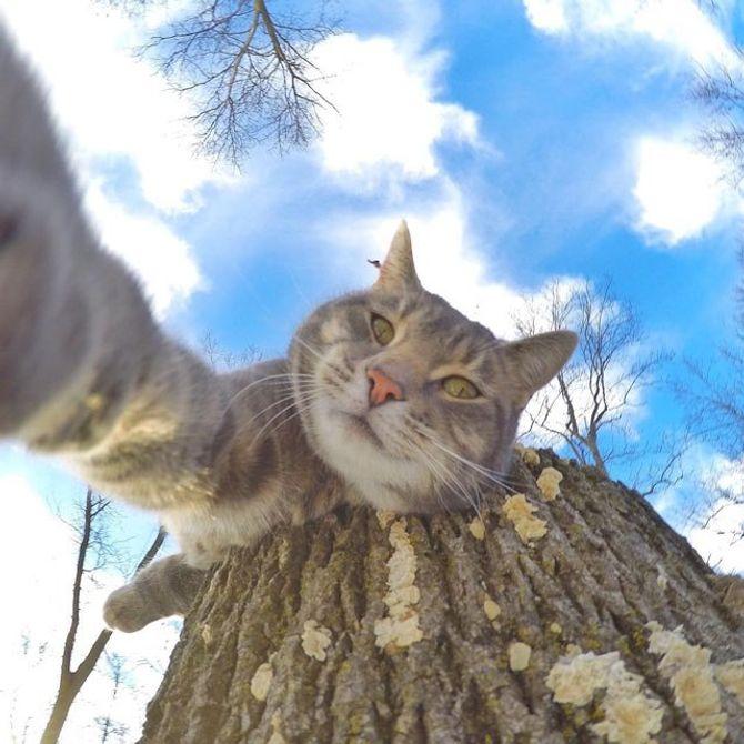 """Manny, il """"gatto selfie"""""""