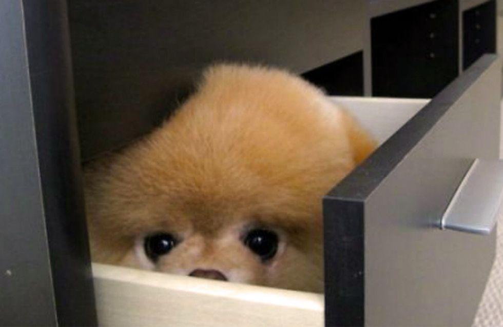 20 mascotas convencidas de estar muy bien escondidas