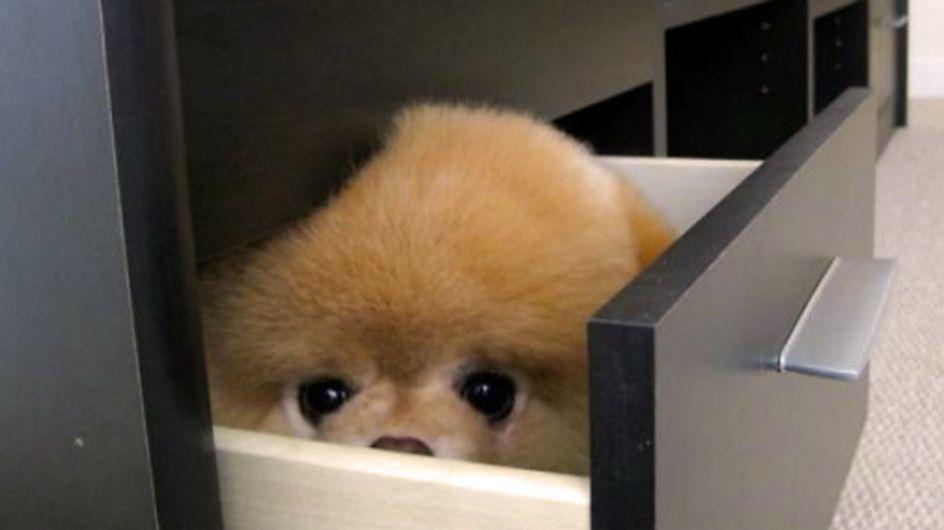 20 cuccioli convinti di essersi nascosti benissimo