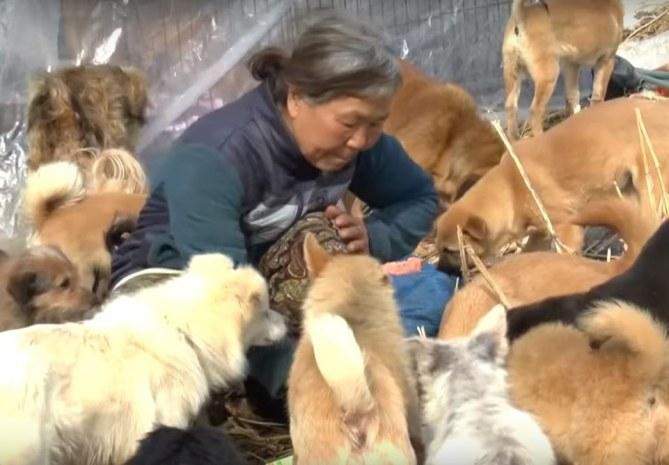 Jung Myoung-Sook et ses chiens