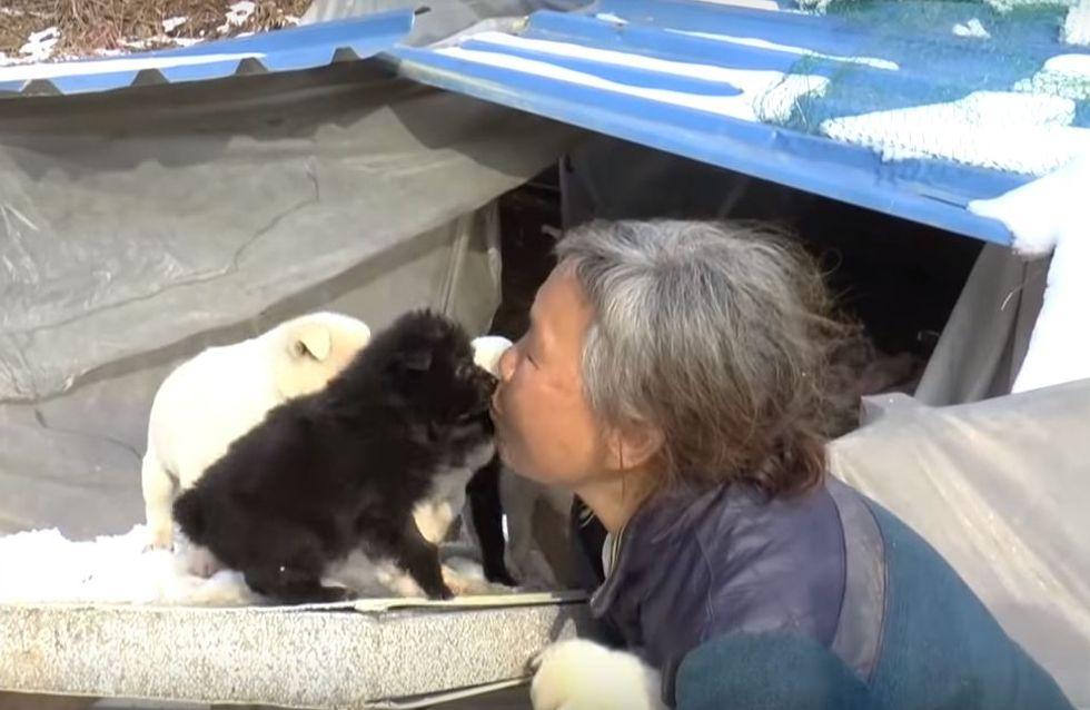 Cette mamie sud-coréenne élève les 200 chiens qu'elle a sauvés de la mort