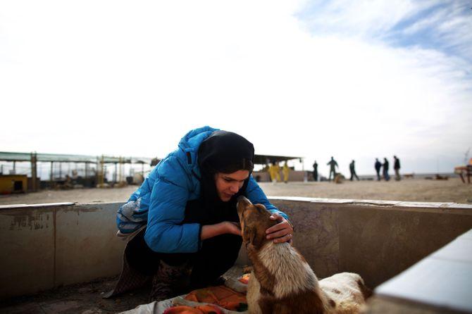 Un refuge pour chiens en Iran