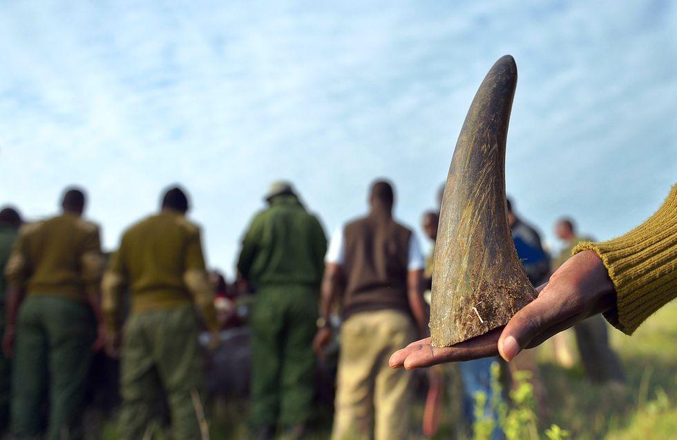 L'Europe déclare la guerre aux braconniers et trafiquants d'animaux