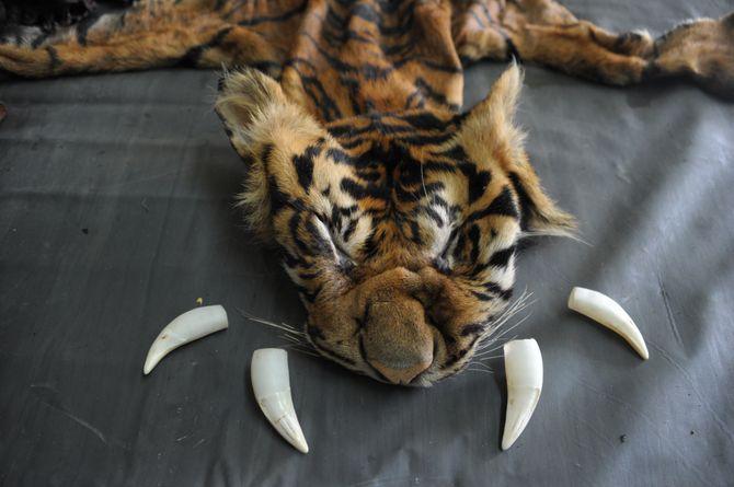 L'Europe déclare la guerre au braconnage et au trafic d'animaux