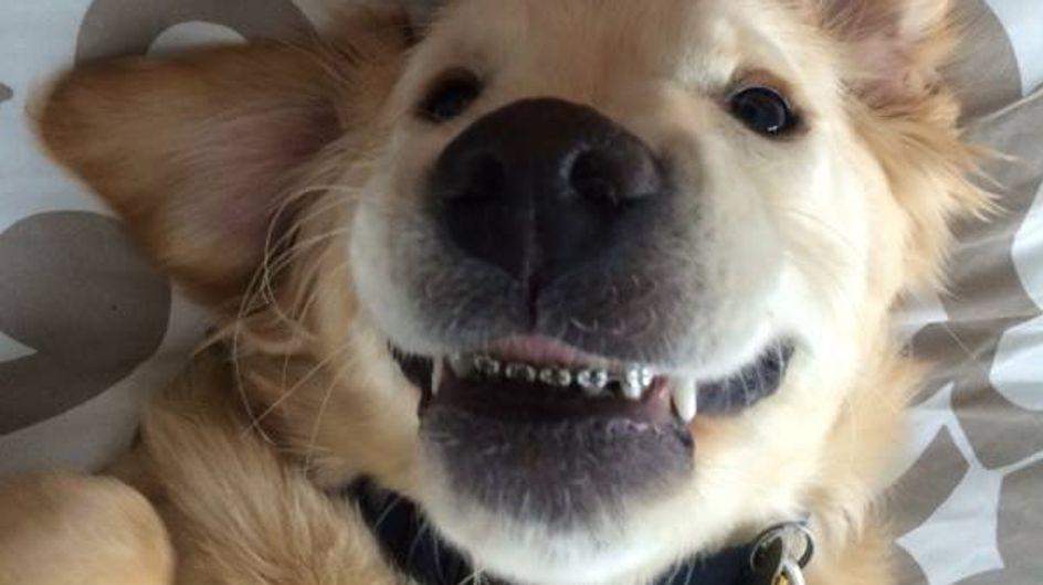 Ecco la storia di Wesley, il cagnolone con l'apparecchio che scalda il cuore dell'America
