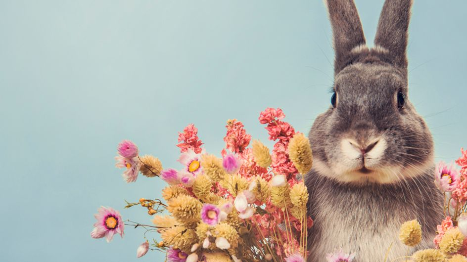 A Bunny Rabbit Spa Is About To Open In London