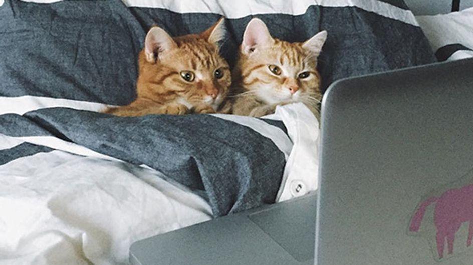 Love is in the cat... ¡Las 50 mejores fotos de gatos enamorados!