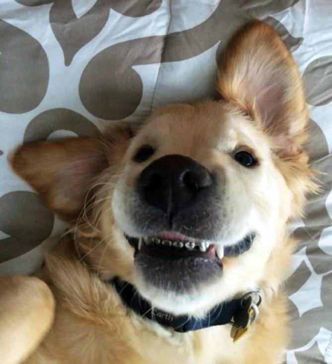 Le nouveau sourire de Wesley