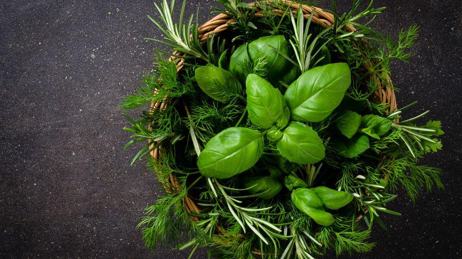 Nie wieder welke Basilikum-Pflanzen: So einfach könnt ihr Kräuter einfrieren!