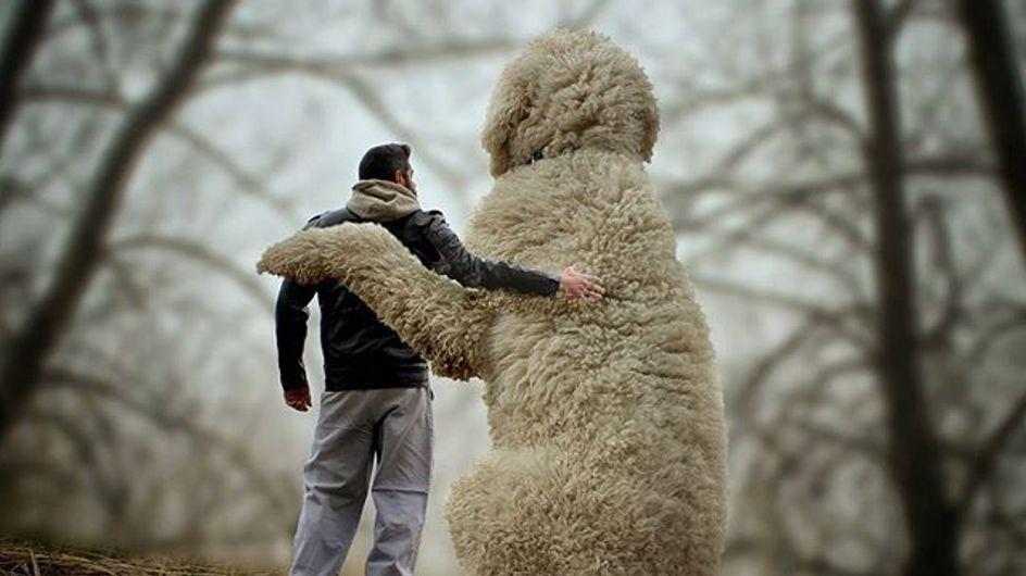 Questa serie di foto è una vera e propria lettera d'amore al suo cane!