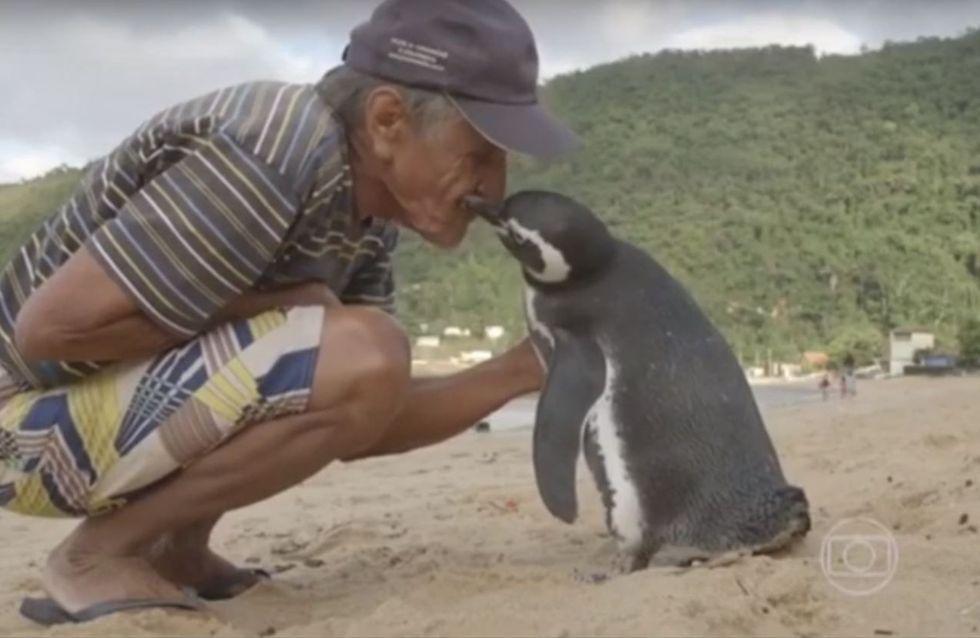 Dieser Pinguin reist jedes Jahr 8.000 km, um den Mann zu besuchen, der sein Leben gerettet hat