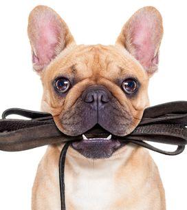 Horóscopo canino, descubre por qué tu perro es cómo es