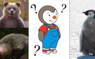 Mais quel animal est donc Tchoupi ? et autres questions que l'on s'est tous posé