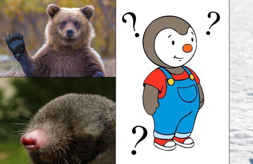 Mais quel animal est donc Tchoupi ? et autres questions que l'on s'est tous posées devant les dessins animés
