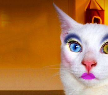 Así es la última moda que arrasa en Japón: gatos maquillados