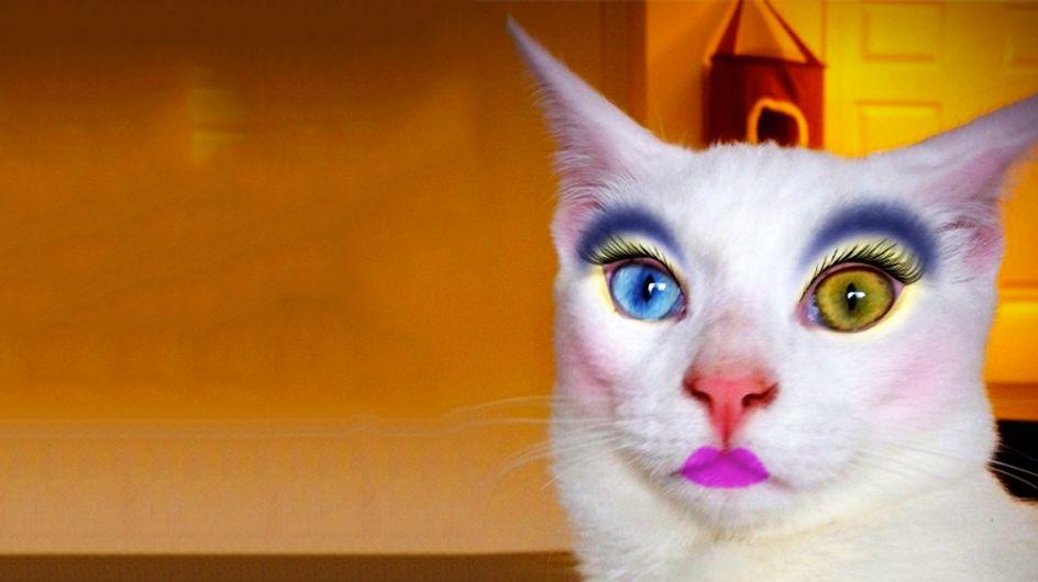 Gatti con l'ombretto: la nuova tendenza giapponese (foto)