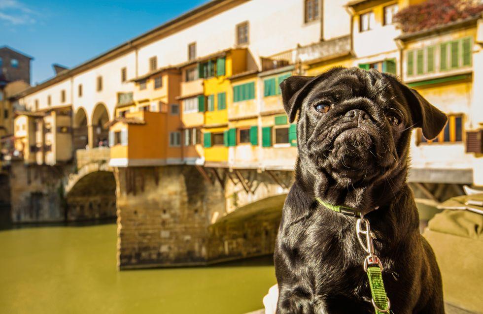 10 lugares perfectos para viajar con tu perro
