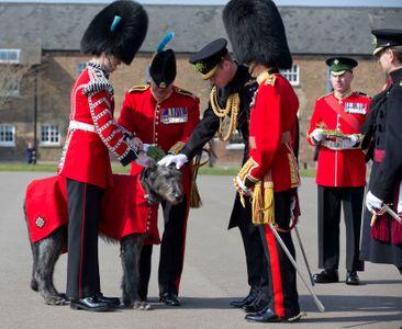 Le Duc de Cambridge et Domhnall, la mascotte du bataillon