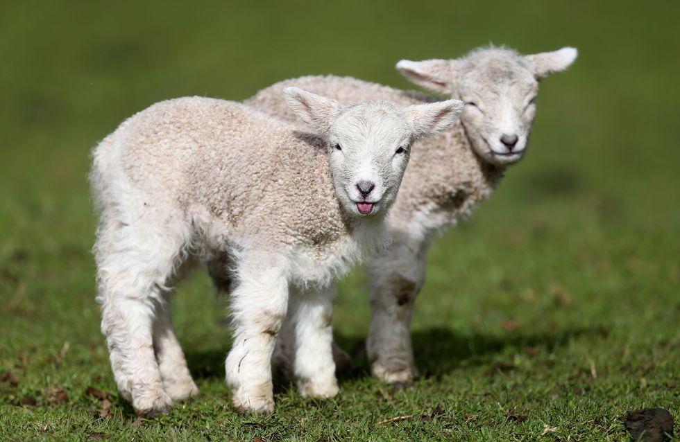 La Nouvelle Zélande reconnait que TOUS les animaux sont des êtres sensibles