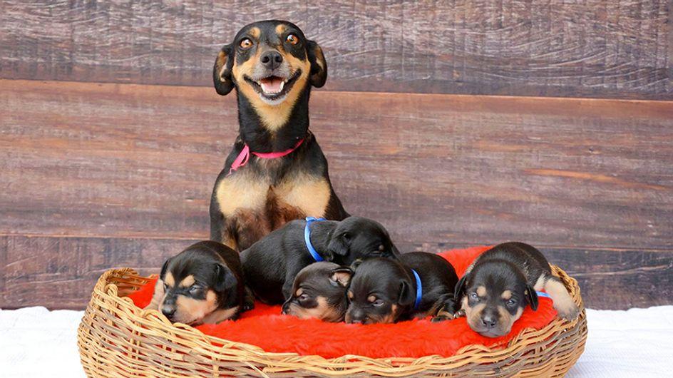 Maternidad animal: Antes y después en el embarazo de la perrita más entrañable