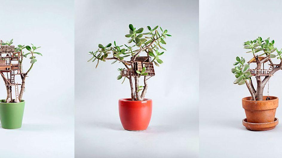 Artista americano monta casinhas em miniatura nas plantas. Veja que graça