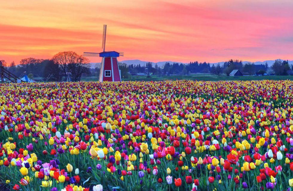 ¡Flower Power! Estos 35 increíbles paisajes llenos de color harán de la primavera tu estación favorita