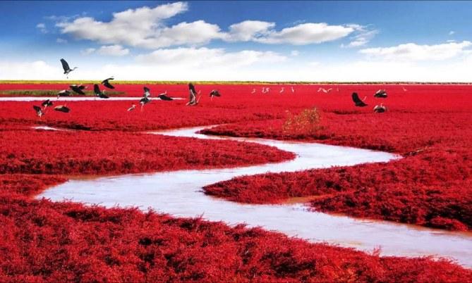 Playa Roja de Panjín, China