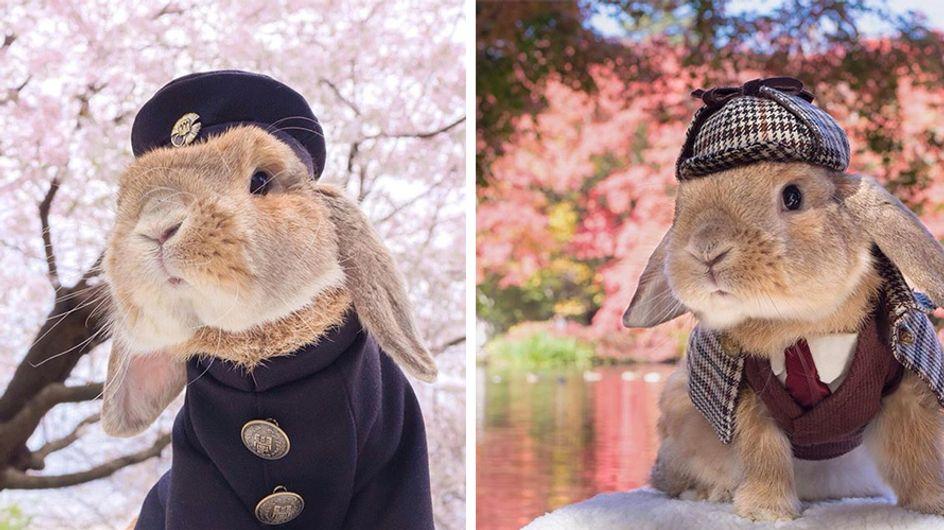 PuiPui, el conejo más hipster y cool del planeta