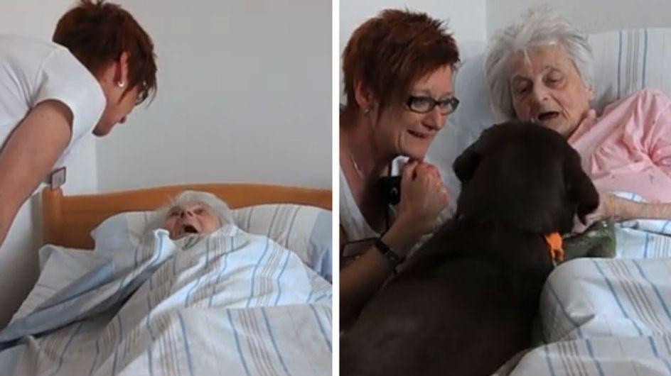 Ein Hund im Altersheim: So viel Freude bringt Hündin Lotte den Bewohnern ♥♥♥