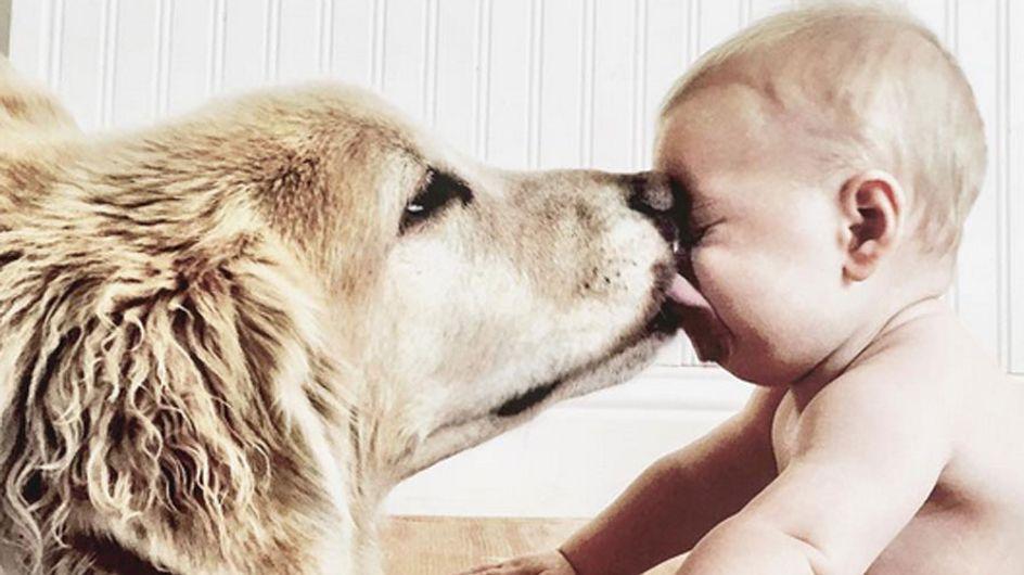 Wir wollen einen Hund! Und ein Baby! Das sind mit Sicherheit die süßesten Bilder des Tages! ♥♥♥