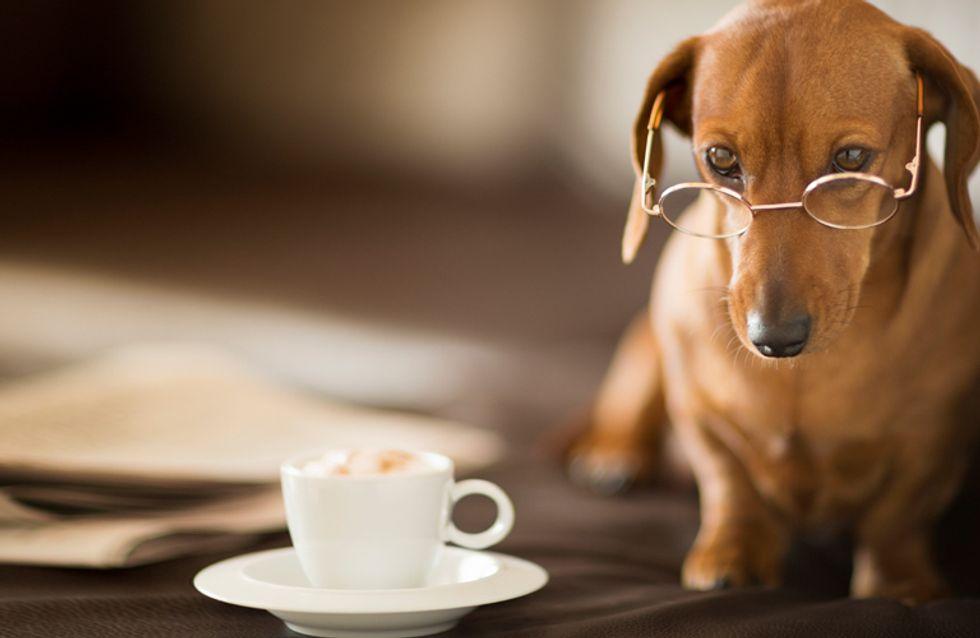 perro adoptado antes y despues de adelgazar