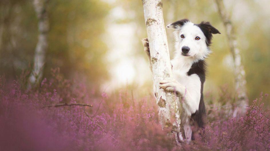 30 preciosas fotografías que te alucinarán si te encantan los perros