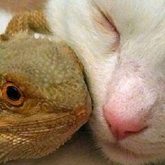 Gato e lagarto são melhores amigos