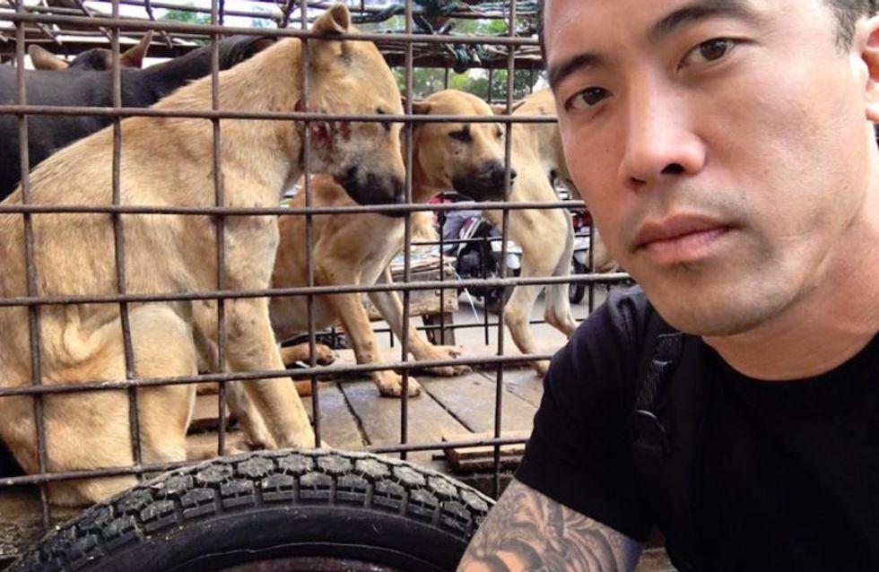 Cet homme a sauvé 1000 chiens du Festival de Yulin où ils devaient être mangés