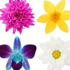 Você sabe identificar as flores da nossa lista?