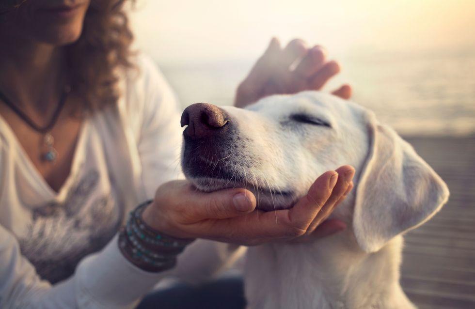 10 motivos por los que debes adoptar un perro este verano