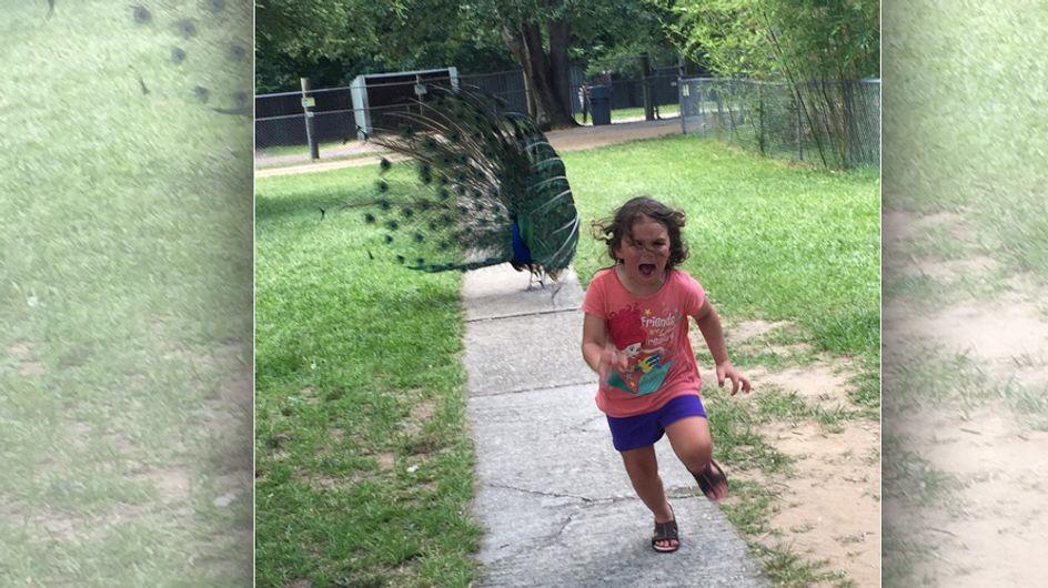 Streichelzoo des Grauens: Dieses Mädchen hat gerade Bekanntschaft mit einem Pfau gemacht