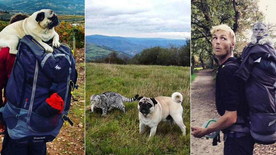 Nicht ohne unsere Haustiere: Diese beiden Abenteurer sind mit Hund und Katze unterwegs