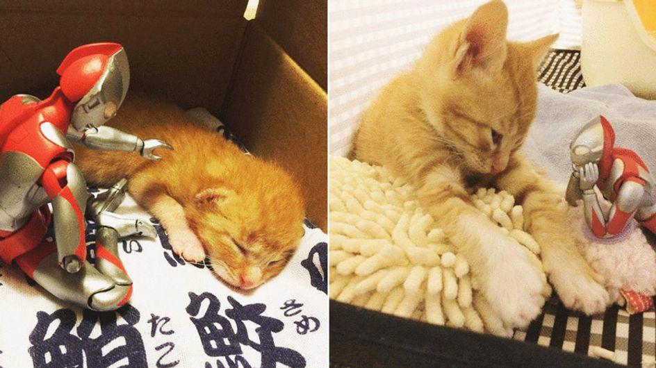 Ultra beste Freunde: Dieses Kätzchen und sein Begleiter sind bezaubernd ❤
