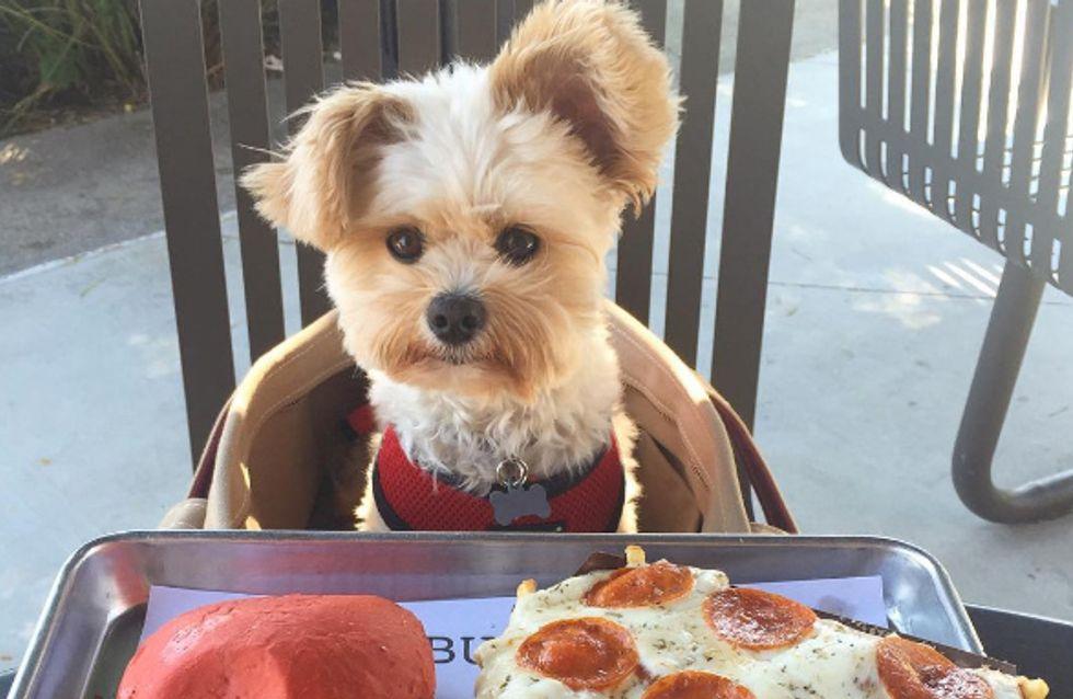 Un adorable cachorro foodie revoluciona Instagram, ¡mira sus fotos!