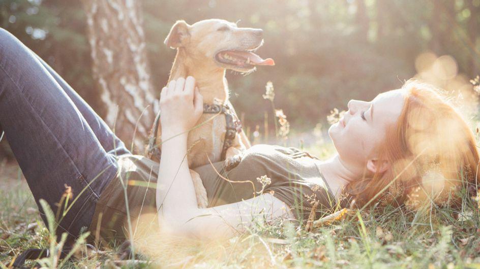17 Dinge, die du NIEMALS zu einem Hundebesitzer sagen solltest