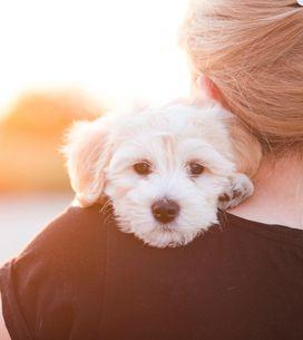 10 ottimi motivi per cui scegliere un cane come amico a quattrozampe