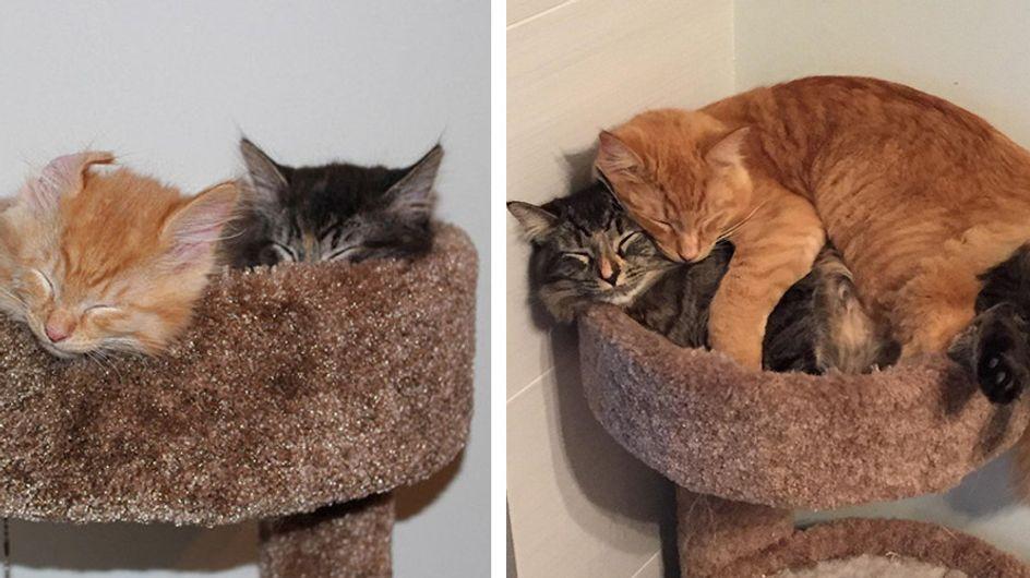 Best Friends Forever: Diese beiden Schmusekatzen können einfach nicht mehr ohne einander