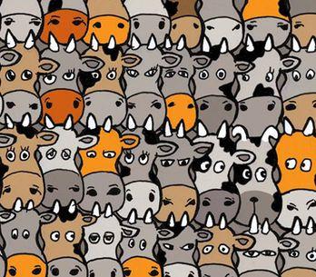 Tierisches Suchbild: Hier versteckt sich irgendwo ein Hund - kannst du ihn finde