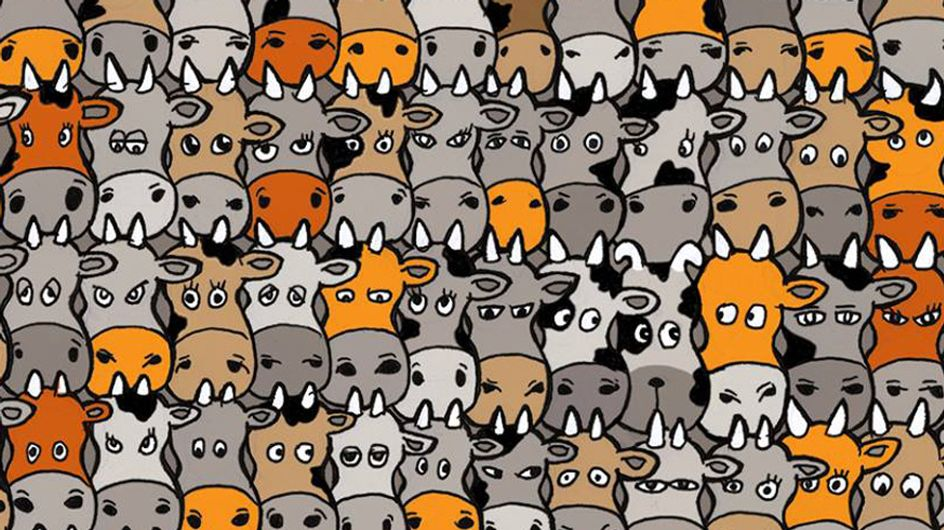 Tierisches Suchbild: Hier versteckt sich irgendwo ein Hund - kannst du ihn finden?