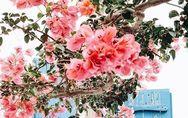 Kaliméra! DAS sind die 8 genialsten Reisetipps für Mykonos