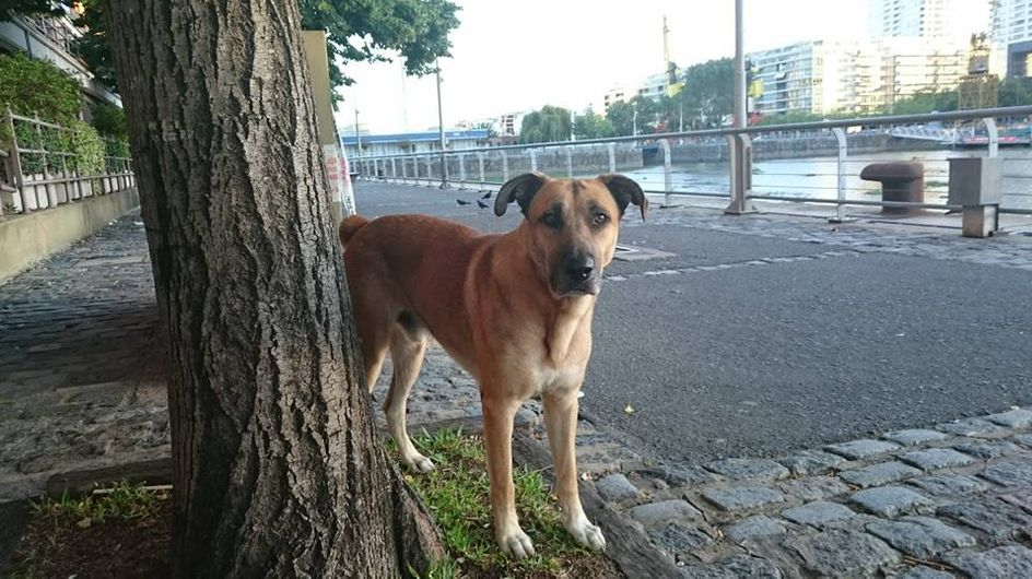 Dieser Straßenhund wartet monatelang auf sein neues Frauchen - bis sie ihn endlich mit nach Hause nimmt
