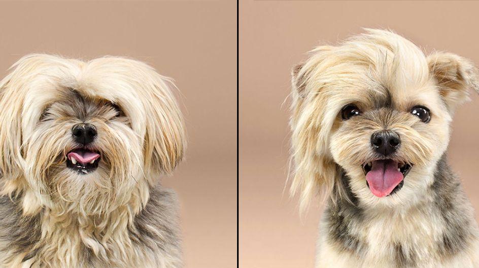 ¡Cambio radical! El espectacular antes y después de 10 mascotas tras un cambio de look