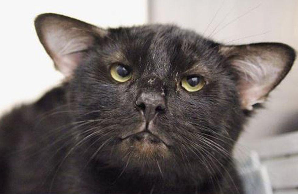 Vier Ohren & zum Knutschen süß: Katze Batman erobert unsere Herzen im Sturm